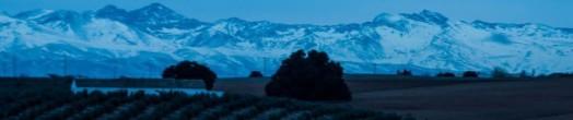 Cortijo de la Viña y encina milenaria (al fondo, Sierra Nevada). Fuente: Ramón Rivera