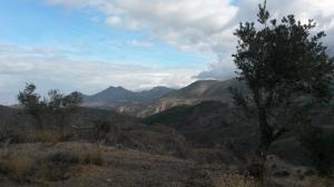 Cultivos de olivos y almendros