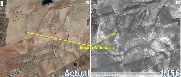 Comparativa actual con la de 1956 de las ortofotos de la zona de la encina milenaria
